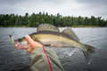 Angler holding walleye fish Royalty Free Stock Photo