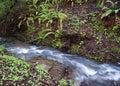 Angra da cascata Imagens de Stock Royalty Free