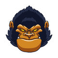 Angry ape gorilla face Royalty Free Stock Photo
