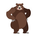 Angry bear on its hind legs. Aggressive Grizzly on white backgro Royalty Free Stock Photo