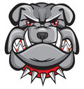 Angry bulldog head Royalty Free Stock Images