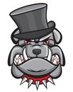 Angry bulldog head with hat vector illustration of the Royalty Free Stock Photos