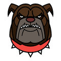 Angry bulldog is in red spiked collar Royalty Free Stock Photography