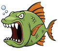 Angry fish cartoon