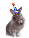 Angry Furry Grey Rabbit With a Birthday Hat On Stock Photography
