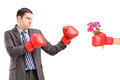 Angry man with boxing gloves hitting a hand with boxing glove an and bunch of flowers isolated against white background Royalty Free Stock Image