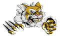 Angry wildcat sports mascot Royalty Free Stock Photo