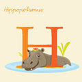 Animal alphabet with hippopotamus vector illustration Stock Images