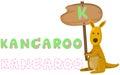 Animal alphabet k with kangaroo Royalty Free Stock Photo