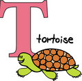 Animal alphabet T (tortoise) Stock Image