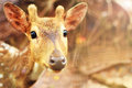 Animal cute deer (family Cervidae) close up with zoo background Royalty Free Stock Photo