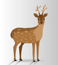 Animal Design, Vector Illustra...