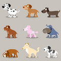 Animal: Dogs collections Stock Photography