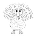 Animal Doodle For Wild Turkey
