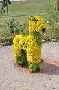 Animal From Flowers