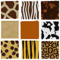 Animal fur set Stock Photography