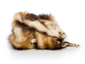 Animal Furs Stock Images