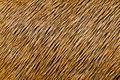 Animal hair texture close up Stock Images