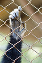 Animal hand closeup monkey behind the cage Royalty Free Stock Image