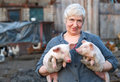 Animal husbandry adult woman keep in the hands of two little pigs Stock Photos