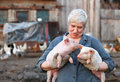 Animal husbandry adult woman keep in the hands of two little pigs Royalty Free Stock Images