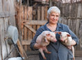 Animal husbandry elderly woman woman keep in the hands of two little pigs Stock Photo