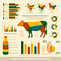 Animal husbandry infographics flat design elements of livestock and chickens vector illustration Royalty Free Stock Image