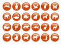Animal icons Royalty Free Stock Images