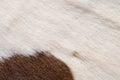 Animal Nature Fur