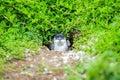 Animal : Penguin at Australia Royalty Free Stock Photo
