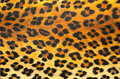 Animal print background texture see my other works in portfolio Stock Image