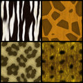 Animal Print Collection Stock Photos