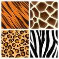 Animal print seamless patterns a set of detailed or textures giraffe cheetah or leopard zebra and tiger skins Royalty Free Stock Photo
