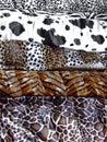 Animal prints assortment Stock Photography