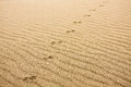 Animal Prints In Sand