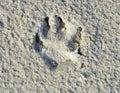 Animal`s Footstamp.