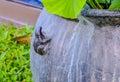 Animal sculptures Royalty Free Stock Photo