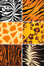 Animal Seamless Patterns