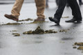 Animal shit on the street people walking a covered with Stock Photos