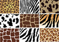 Animal skin Royalty Free Stock Photo