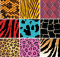 Animal skin Royalty Free Stock Images
