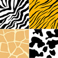 Animal Skin Collection Stock Photography