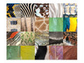 Animal skin fur pattern detail collection Royalty Free Stock Photos