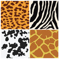 Animal skin pattern set four include leo zebra cow and giraffe Stock Photo