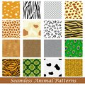 Animal skin seamless pattern easy to edit vector illustration of Stock Photography
