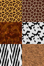Animal skin seamless pattern set Royalty Free Stock Photo
