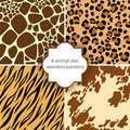 Animal skin seamless patterns Royalty Free Stock Photography