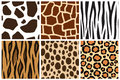 Animal skin. Seamless patterns for design. Cow, giraffe, zebra, tiger, cheetah, leopard Royalty Free Stock Photo