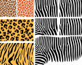 Animal Skin set Royalty Free Stock Images