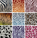 Animal skin textures Royalty Free Stock Images